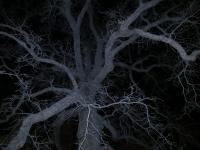 76_16council-oak.jpg