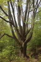 76_meeting-tree-5585-sm.jpg